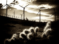 Turbines and Cacti